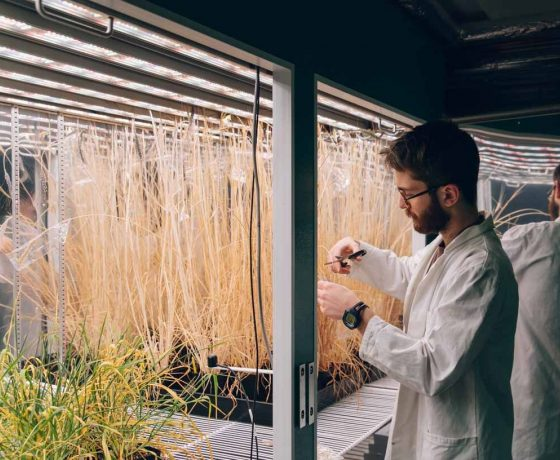 sheffield-university-plant-growth-cabinet-LED 3