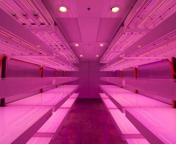 germination-room-philips-LED 2