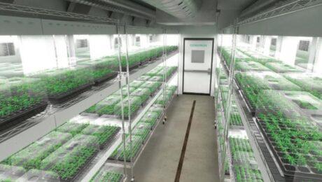 cannabis-clone-room 2