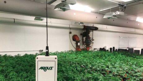 cannabis-room-Argus-sensor 1