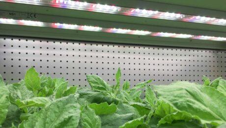john-innes-centre-LED-valoya 1