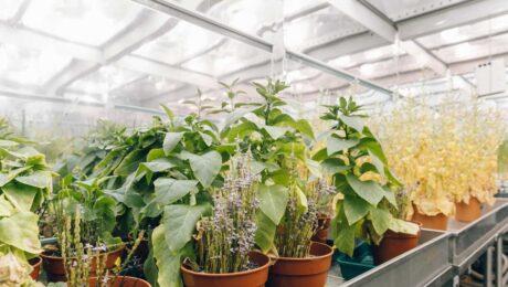 sheffield-university-plant-growth-room 3