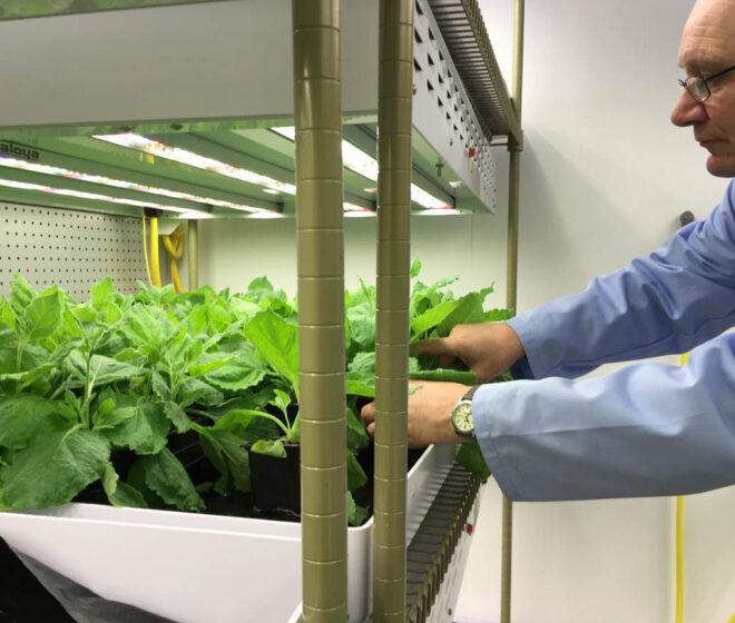 Plant-Derived Pharma