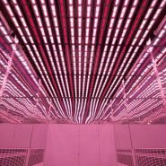 CIAT-colombia-plant-growth-room-LED