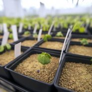 Indigo Plant Growth Room