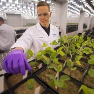 Indigo Researcher in Plant Growth Room