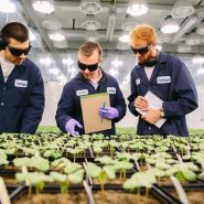 Indigo Researchers in Plant Growth Room