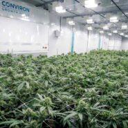 abcann-cannabis-growth-house 1