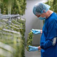 atlanticann-cannabis-drying-room 6