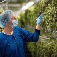atlanticann-cannabis-drying-room 8