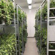 atlanticann-cannabis-drying-room