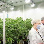 cannabis-flower-room 14
