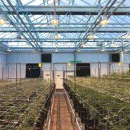 cannabis-greenhouse-argus-control-system 2