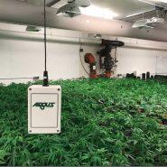 cannabis-room-Argus-sensor