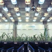 plant-growth-room-lemnatech-phenotyping