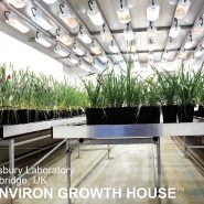plant-growth-room-research-united-kingdom 2