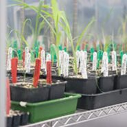 sheffield-university-plant-growth-cabinet