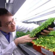 sheffield-university-researcher-plant-growth-room 10