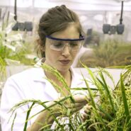 sheffield-university-researcher-plant-growth-room 3