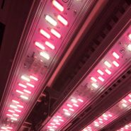 valoya-LED-plant-growth-chamber 10