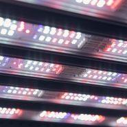 valoya-led-lighting-conviron-chamber