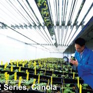 walk-in-plant-growth-room-canola 20