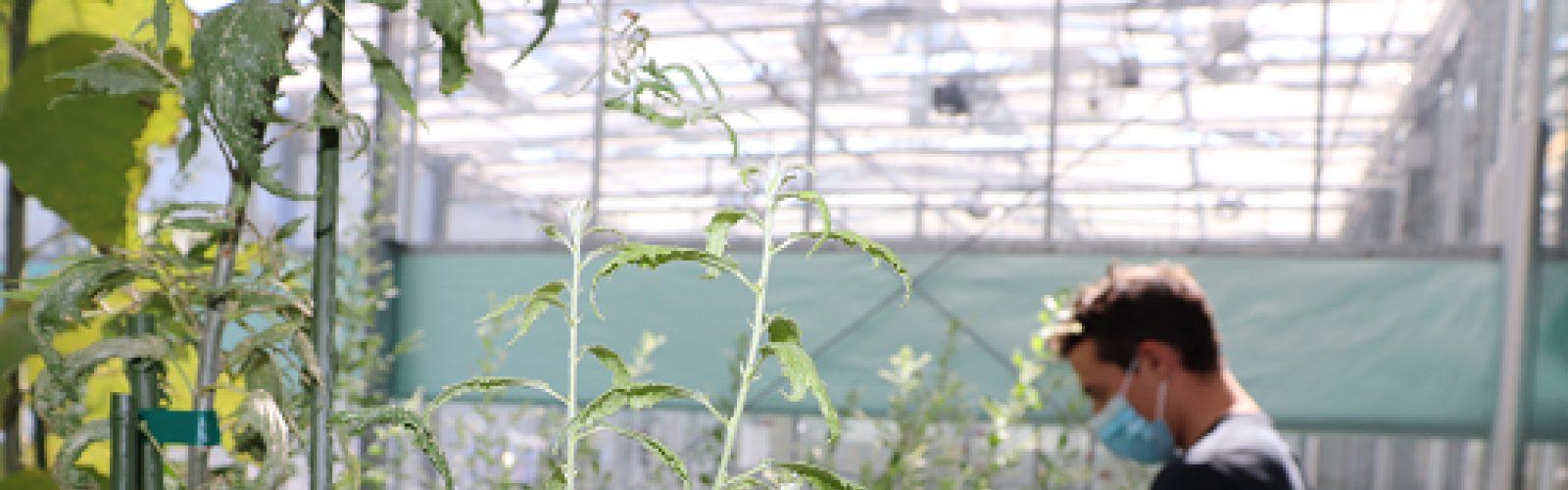 university-victoria-plant-science 1