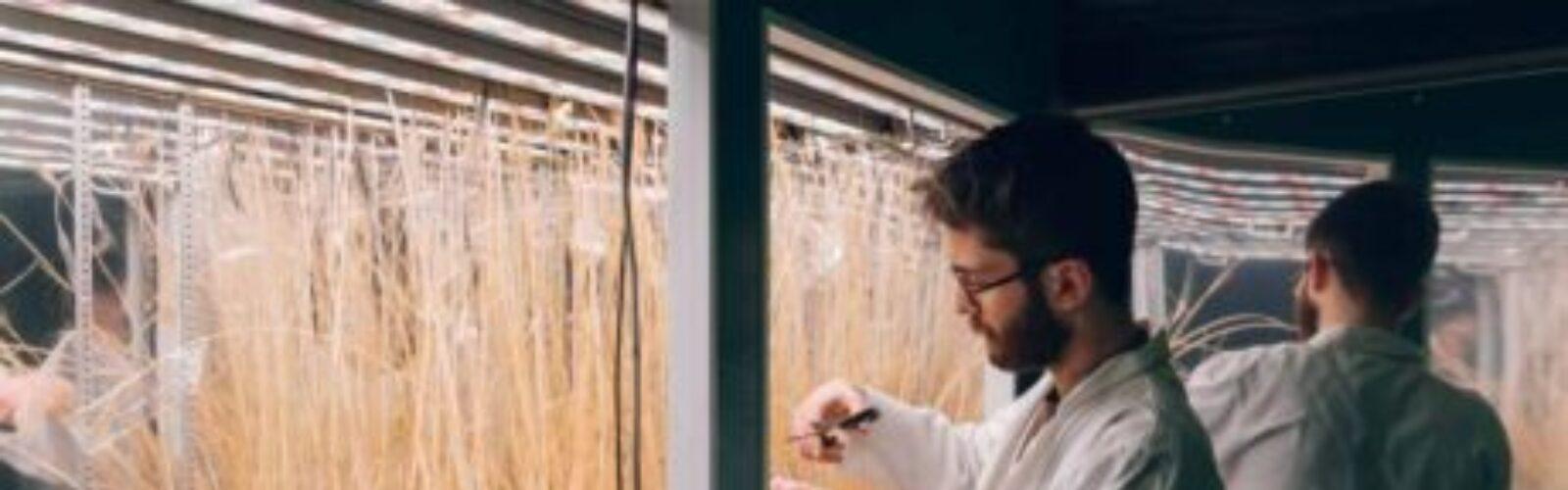 sheffield-university-plant-growth-cabinet-LED