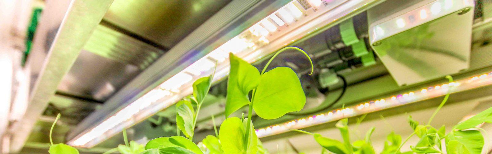 valoa-LED-growth-room 9