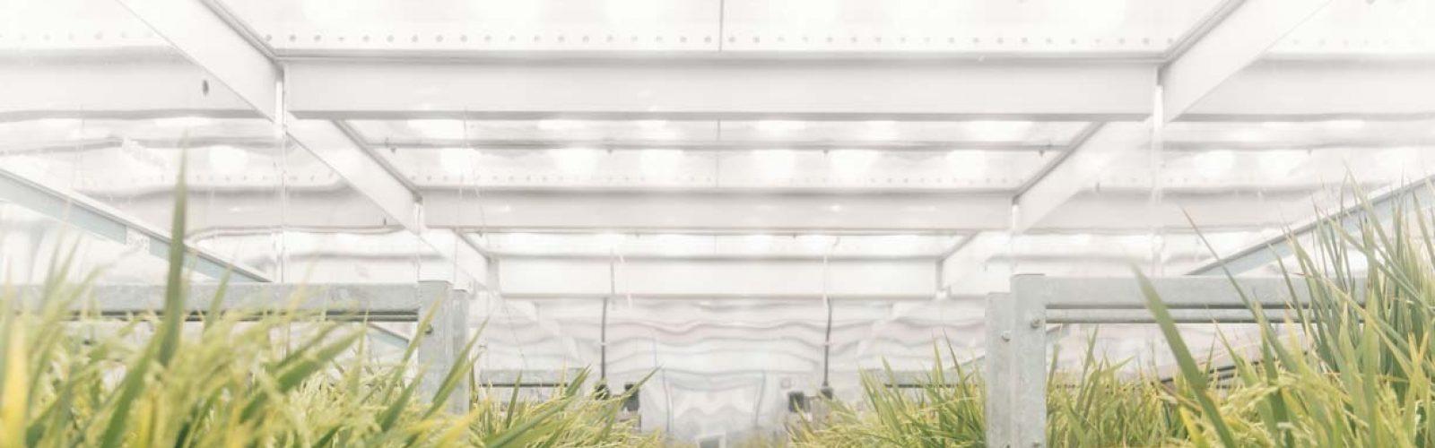 sheffield-university-plant-growth-room 5