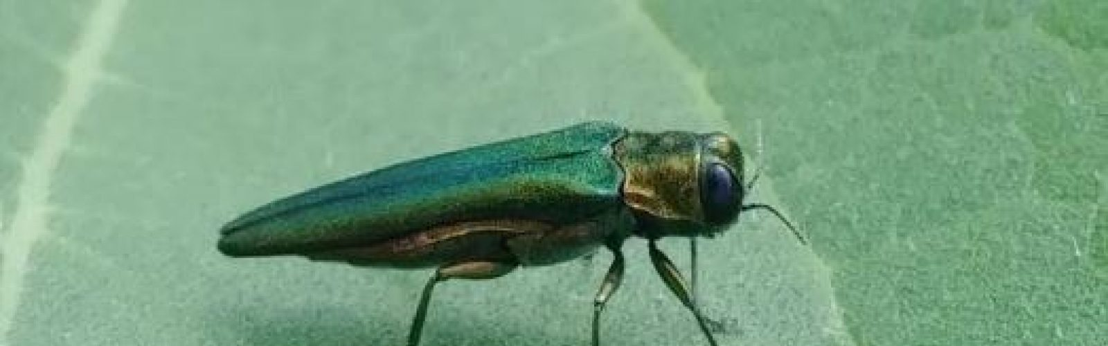Insectary entomology leaf