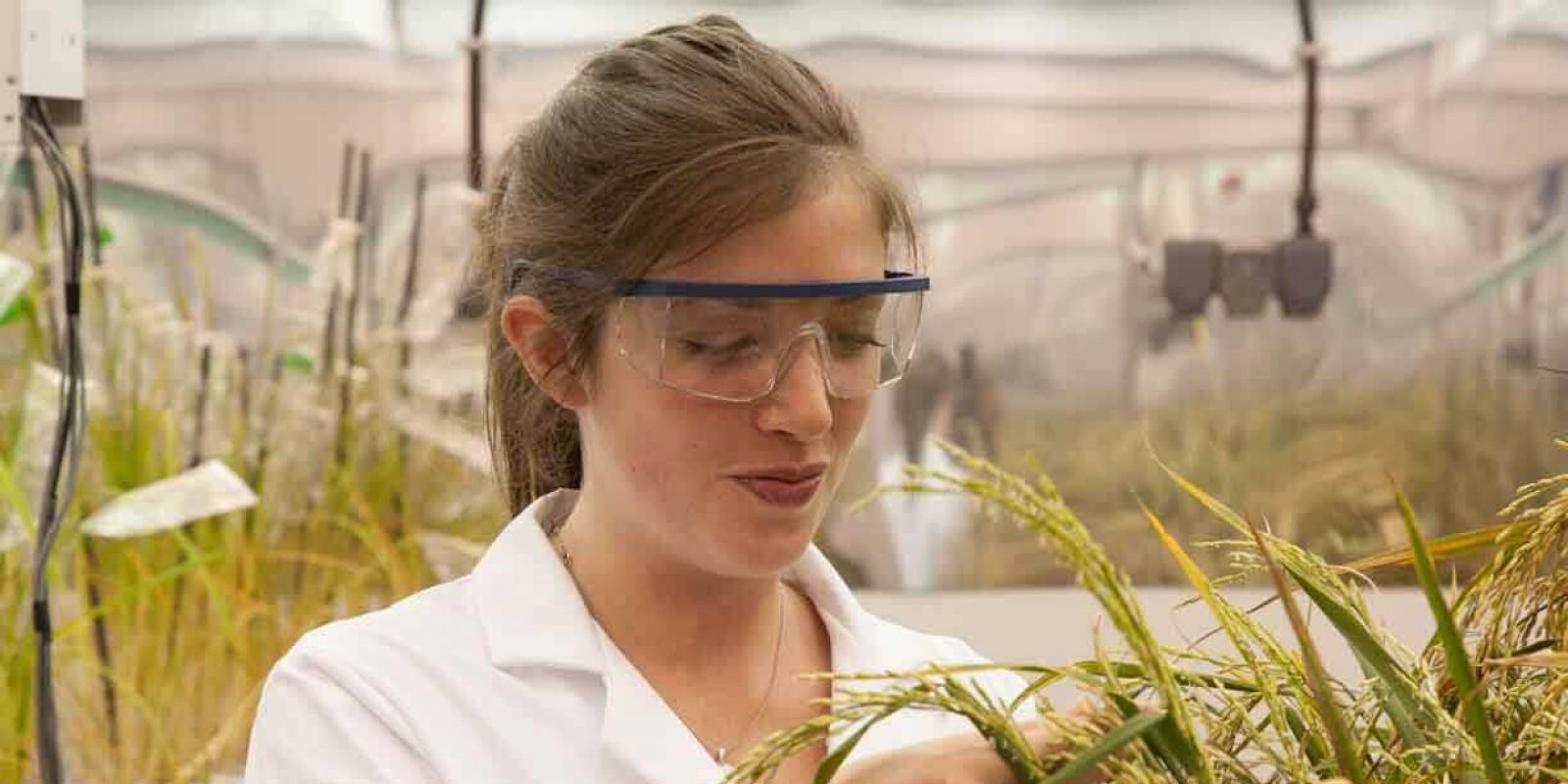 sheffield-university-researcher-plant-growth-room 13