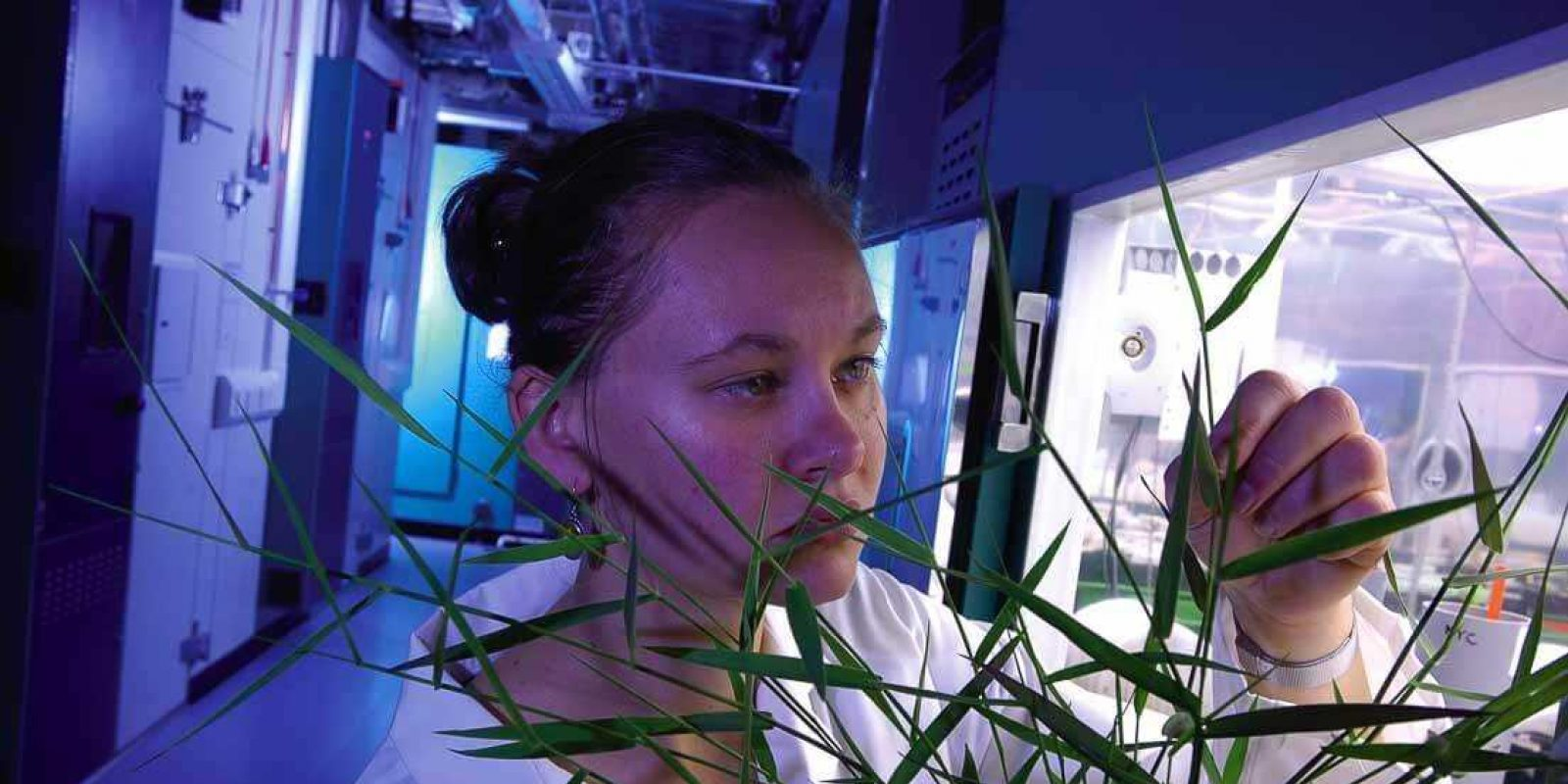 sheffield-university-researcher-plant-growth-room 9
