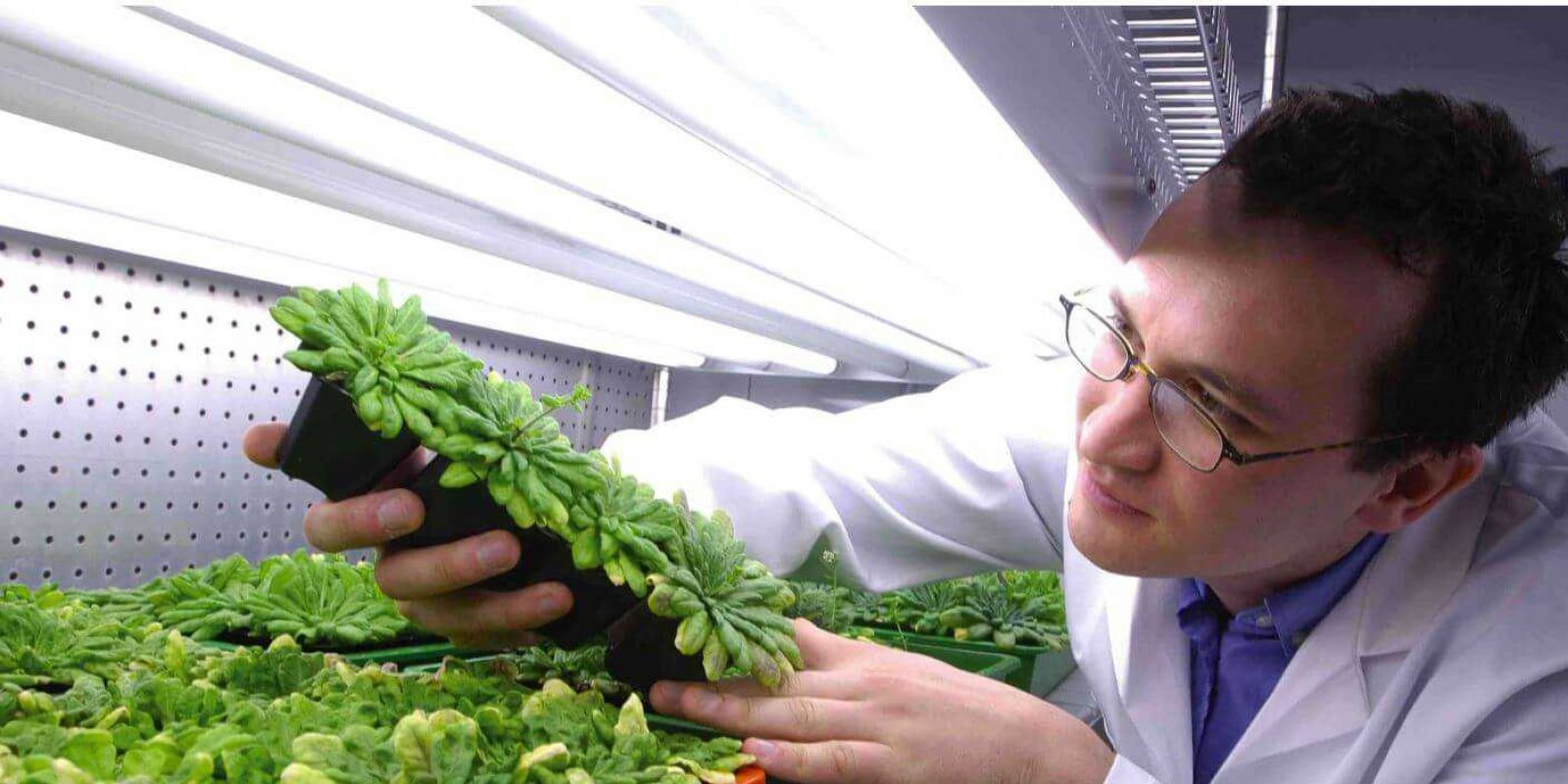 sheffield-university-researcher-plant-growth-room 1