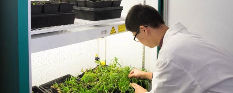 GEN1000 Plant Growth Chamber