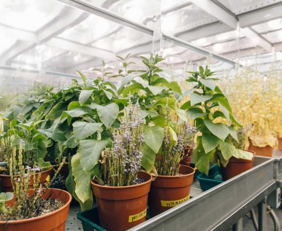 sheffield-university-plant-growth-room 4