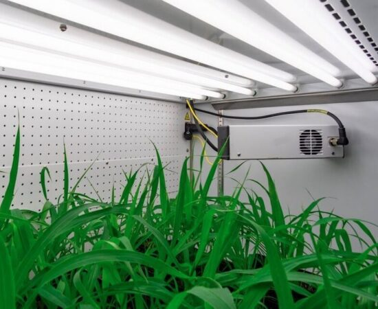 BCIT-plant-growth-chamber-setaria 2