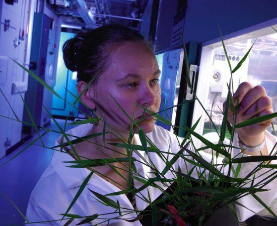 sheffield-university-researcher-plant-cabinet 14