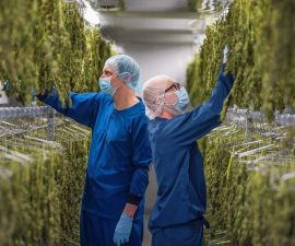 atlanticann-cannabis-drying-room 10