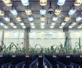 plant-growth-room-lemnatech-phenotyping