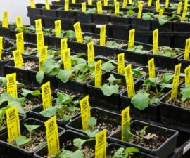 walk-in-plant-grow-room-canola 5