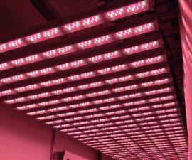 valoya-LED-growth-chamber