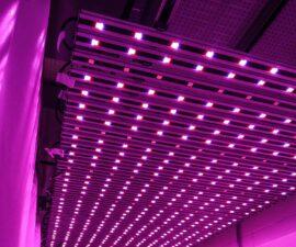 LED Illumitex
