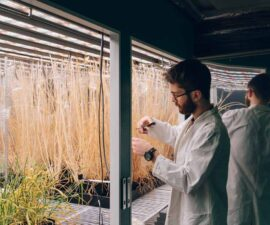 sheffield-university-researcher-plant-growth-room 6