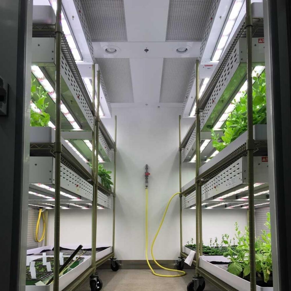 john-innes-centre-plant-growth-room 21