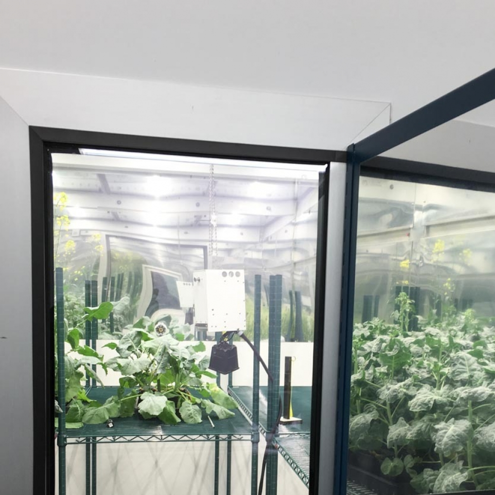 plant-growth-room-bdw 3