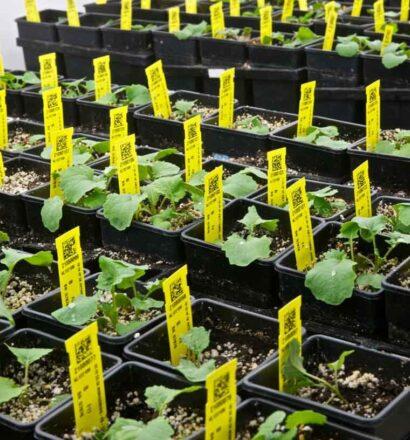 walk-in-plant-grow-room-canola 5