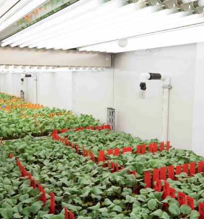 plant-growth-room-canola 15