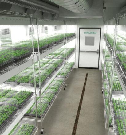 cannabis-clone-room 1