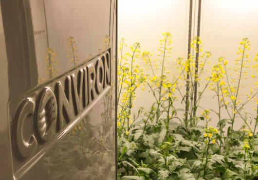 plant-growth-chamber-canola 1